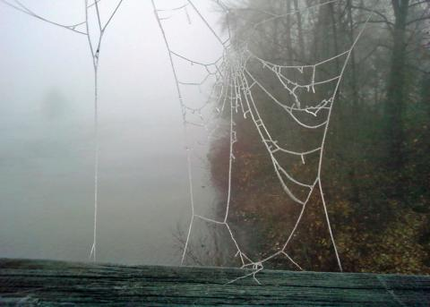 gallery_3047_34_75428.jpg
